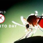 Mosquito day, le Zanzare causano 725 mila morti l'anno