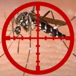 Zanzare virus mortale: USA in allarme, il 30% muore