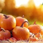 Proprietà della Zucca: Calorie e Valori Nutrizionali