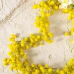 8 marzo, festa della donna tra mimose e mascherine, eventi a rischio