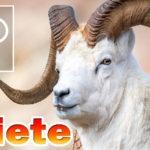 Ariete segno zodiacale, caratteristiche: periodo, affinità, amore, lavoro