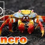 Cancro segno zodiacale: caratteristiche, periodo, amore, lavoro, pregi e difetti
