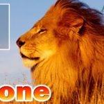 Leone segno zodiacale: caratteristiche, periodo, amore, lavoro, pregi e difetti
